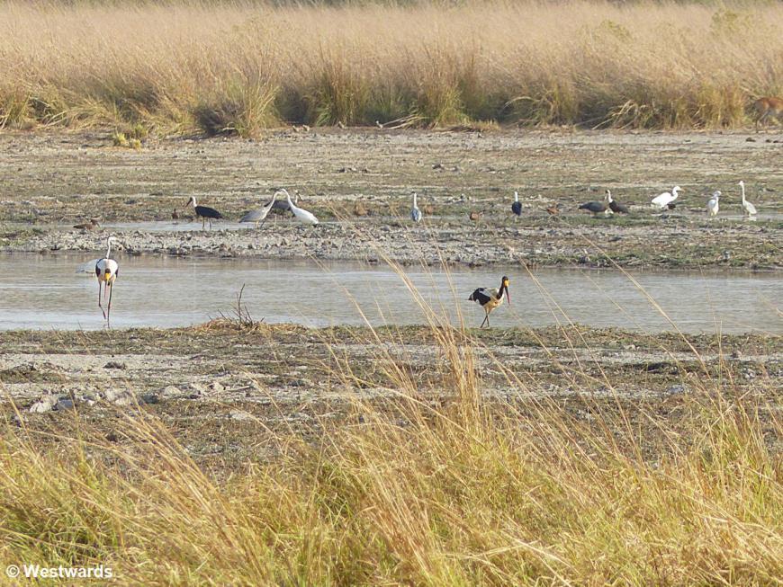 20180211 Pendjari NP Birds P1500915