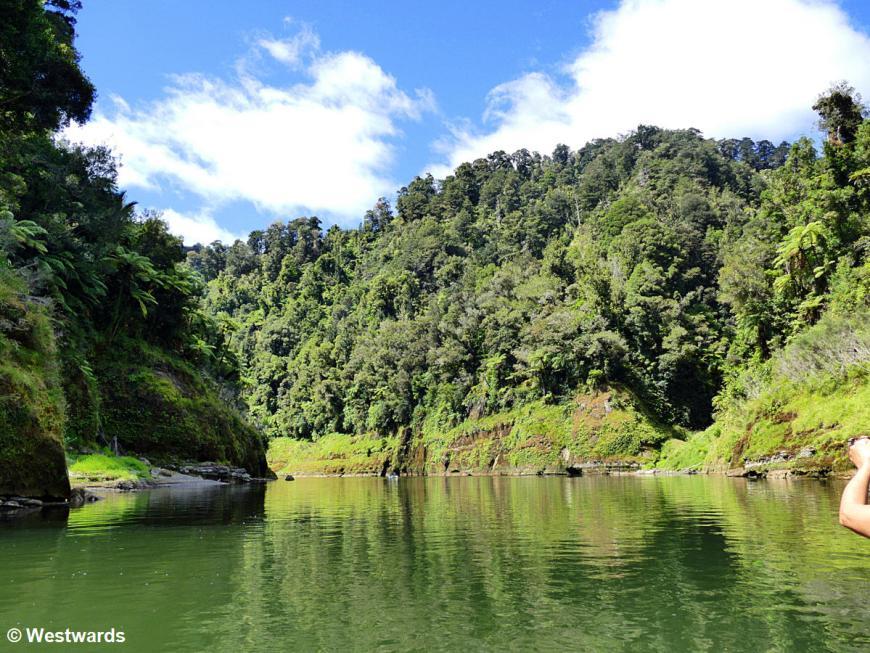 20190213 Whanganui River day4 P1630011