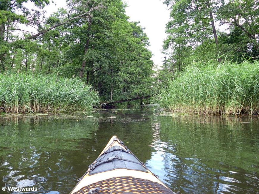 Tip of a yellow kayak on the river Peene