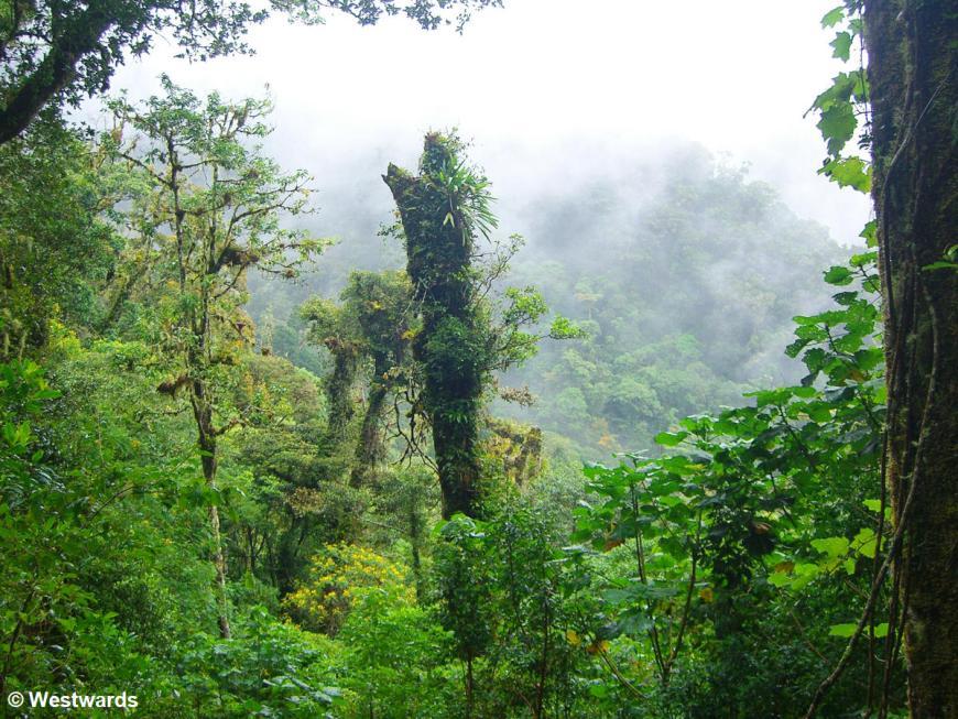Hiking the Sendero Los Quetzales in Northern Panama