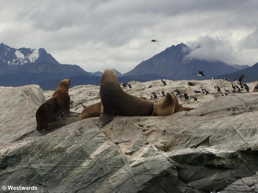 Sealions on Isla de los Lobos in Ushuaia