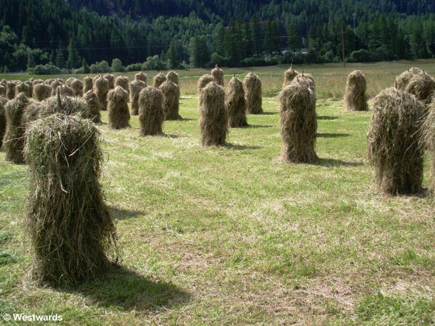 Hay stacks near Tumpen, Tyrol