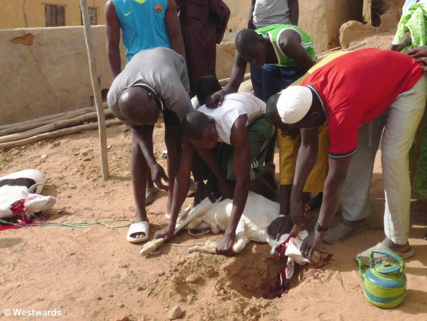 Men in Podor, Northern Senegal, slaughtering a goat for Tabaski