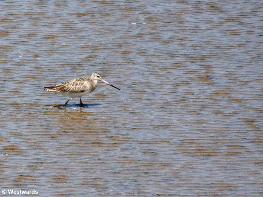 20090127 Fadiout seabird 1030753