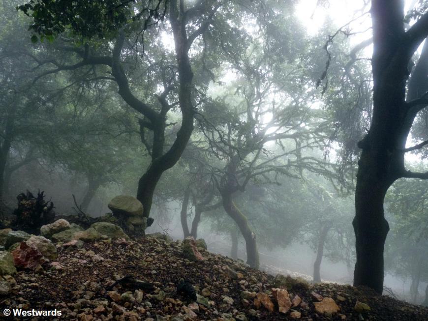 fog between trees on the GR221 Mallorca