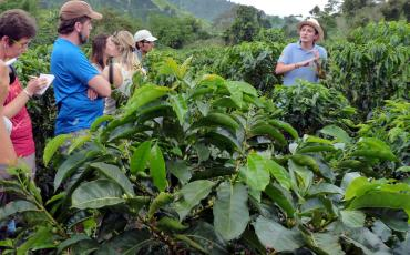 Tourists in a coffee field