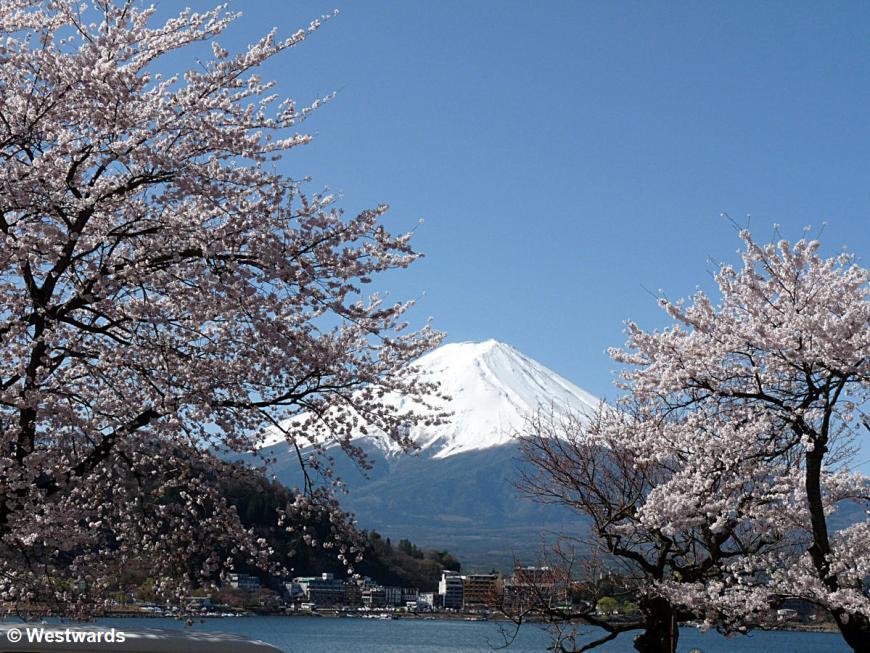Kawaguchiko with cherry blossoms and Fuji-san