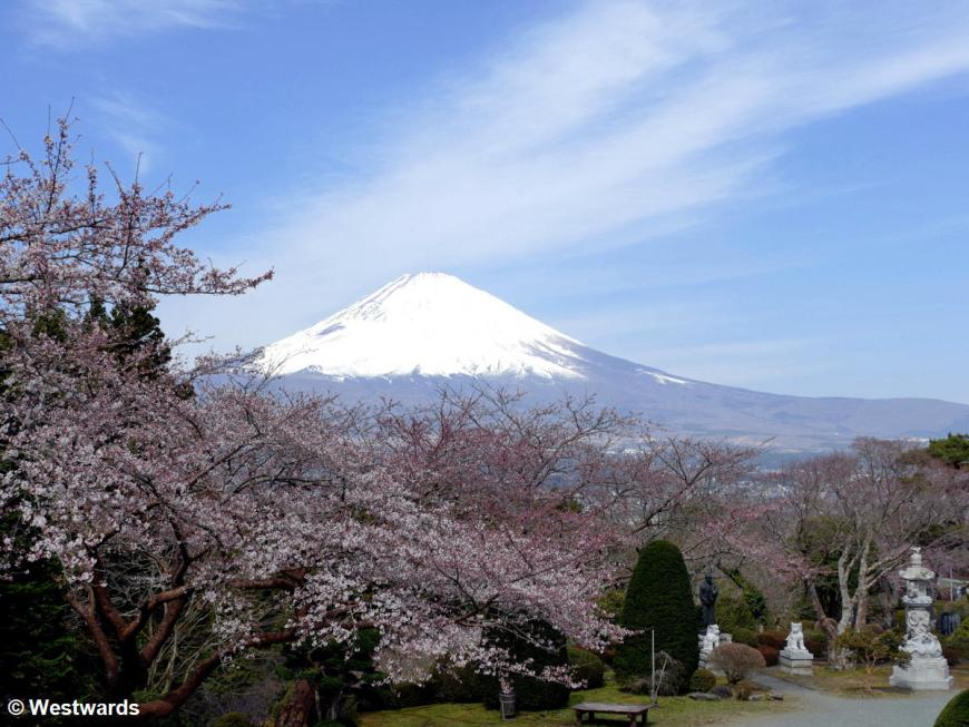 Fuji-san with cherry blossoms seen from Gotenba Heiwa Koen