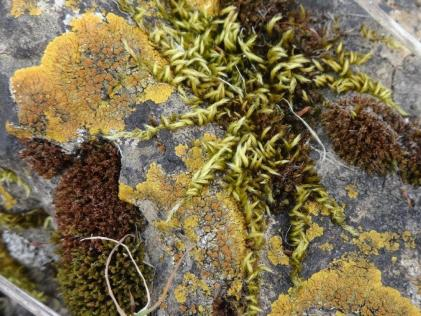 Lichen on rock - MO