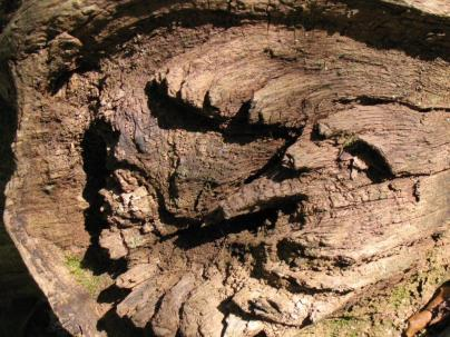 Log - AMF