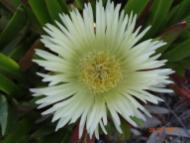 Cactus_MO