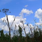 Grass against sky_MB