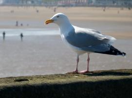 Jonathan-seagull_BW