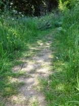 Path 3 PH