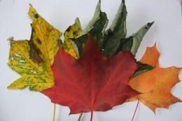 TRF_Autumn-Leaves
