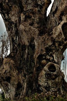 BW. Tree texture.