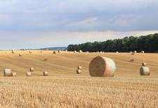 SB Harvest 1