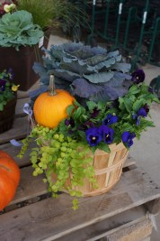 mixed Fall plants in wooden bucket