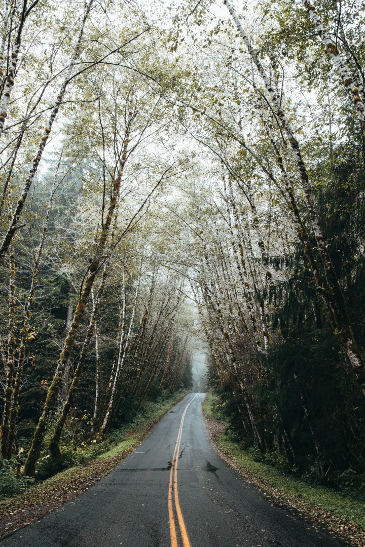 Driving into Hoh Rainforest with mist and trees covering the road