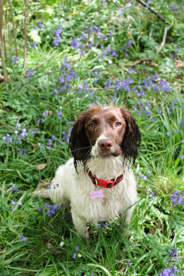 Ellie in the bluebell wood