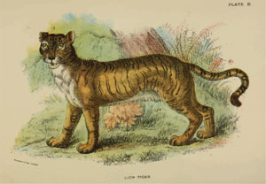 A Handbook to the Carnivora Richard Lydekker 1886