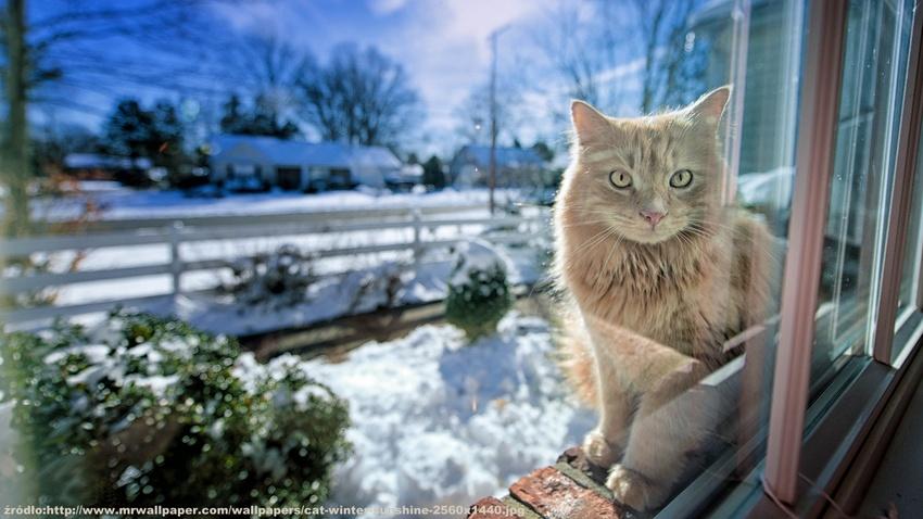 cat-winter-sunshine-2560x1440
