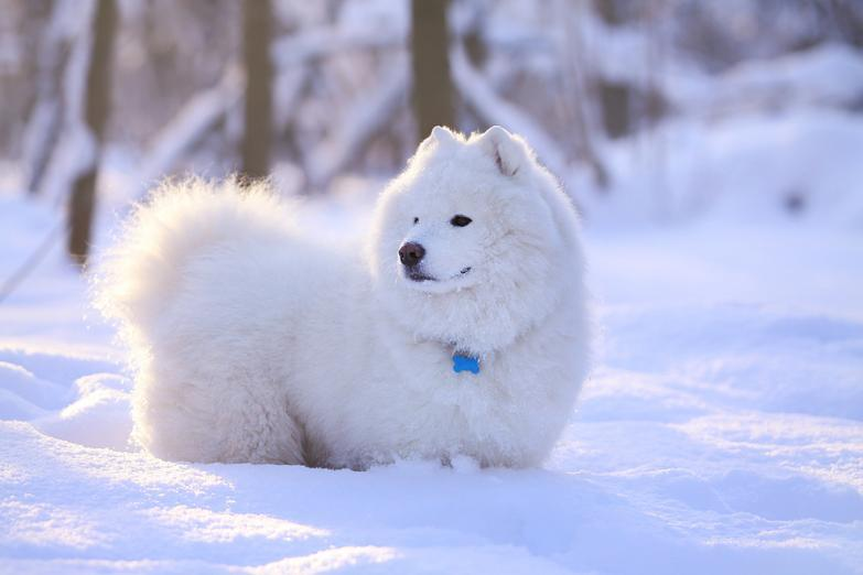 winter_dog
