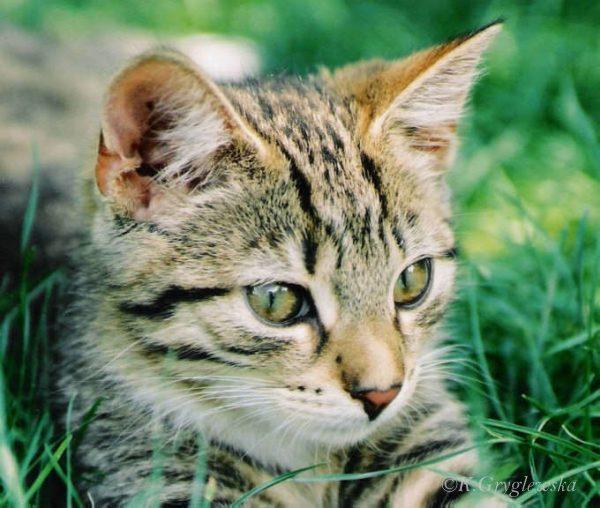Kot tomi fot. K.Gryglewska