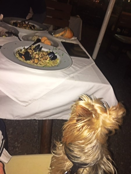 10 Best Food in Budva, Montenegro - seafood spaghetti