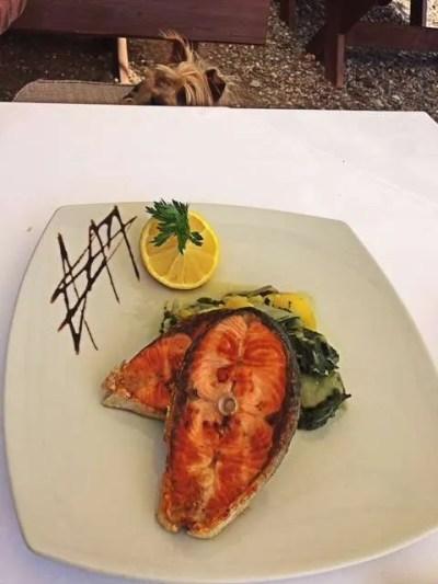 10 Best Food in Budva, Montenegro_salmon filet