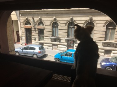 10 Coolest Dog-Friendly Places in Budapest, Hungary