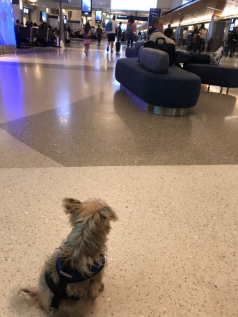 Flying with your dog: 6 MUST-KNOW Tips for in-cabin international dog travel