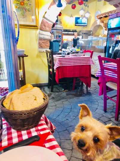 8 Tips on How to Dine with Your Dog