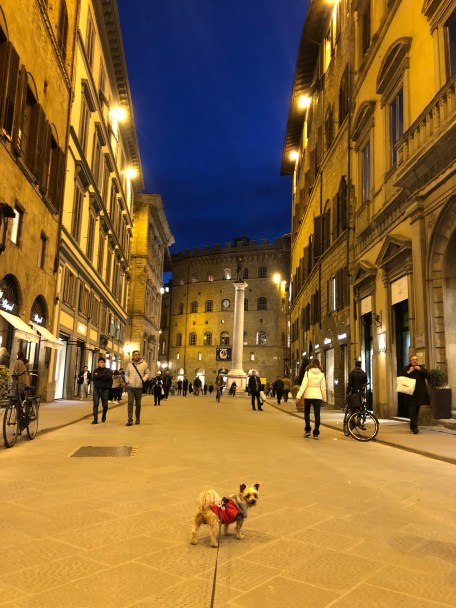 An American dog living in Florence, Italy