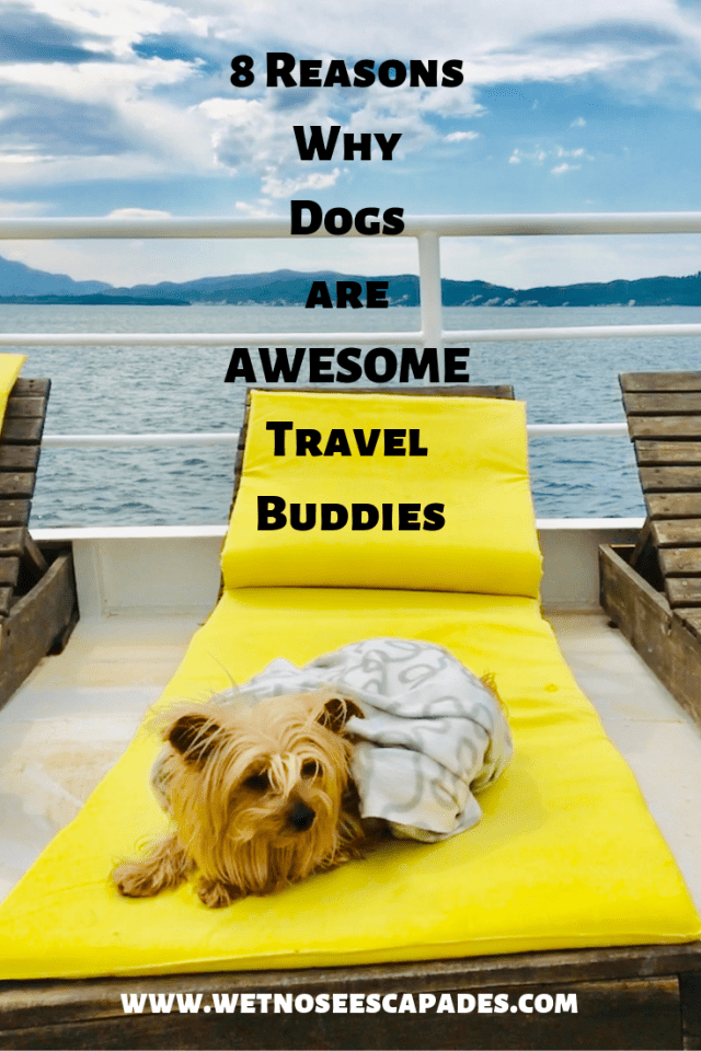 8 Reasons Why Dogs are AWESOME Travel Buddies