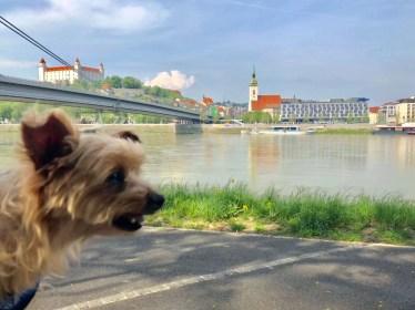 A Yorkie Travels to Dog-Friendly Bratislava, Slovakia