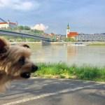 Dog-Friendly Bratislava, Slovakia: A Yorkie's Guide to Dog Travel in Bratislava
