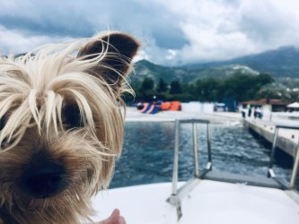 Why Dogs are AWESOME Travel Buddies