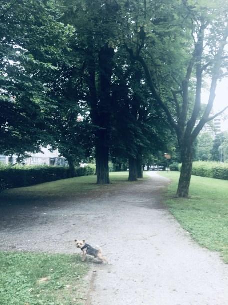 A small dog's escapade in Ljubljana, Slovenia