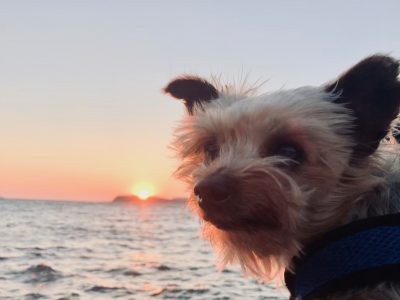 10 Favorite Moments from Roger W., the world traveling yorkie