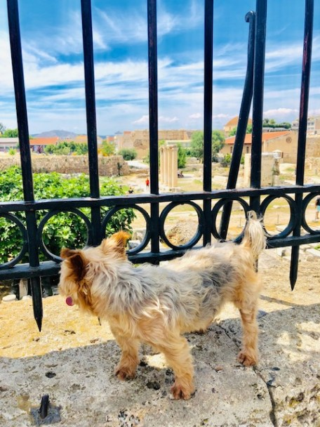 Dog Travel In Athens, Greece: A yorkie's takeover of the ancient city