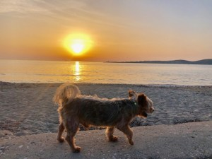 10 Tips for Summer Travel with your dog