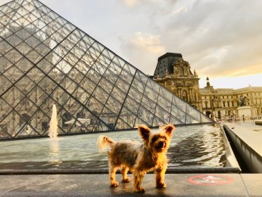Dog travel in Paris: An American Dog explores the Louvre