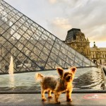 Roger Wellington explores the Louvre: An American dog in Paris!