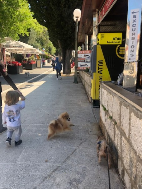 What to teach children about ANIMALS