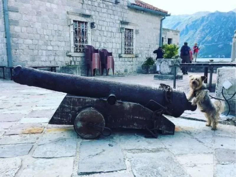 My FABULOUS Yorkie life in Montenegro: