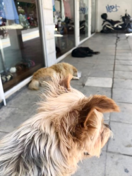 FEED a homeless dog!