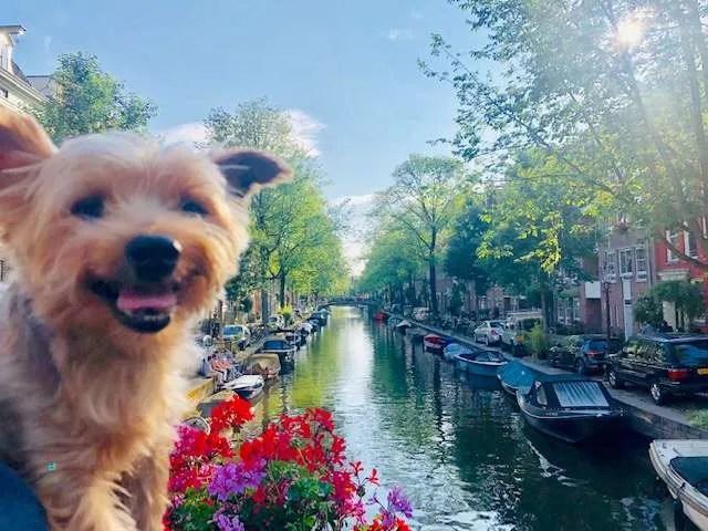 Roger Wellington returns to Amsterdam!