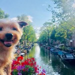 Dog Travel in Amsterdam: The Return of Roger Wellington