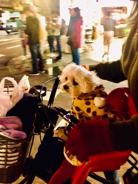 Dogs of Taipei: Part 2